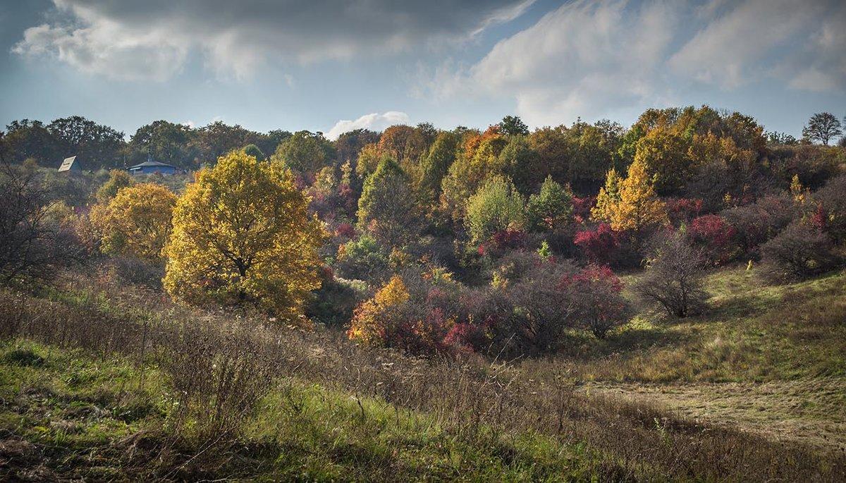 Осенний колорит - Лидия Цапко