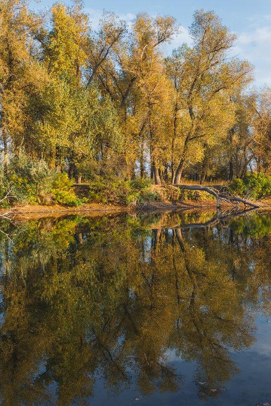 Осенняя симметрия - Сергей Пучков