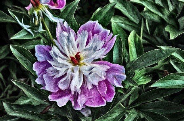 Цветок - Владимир Бровко