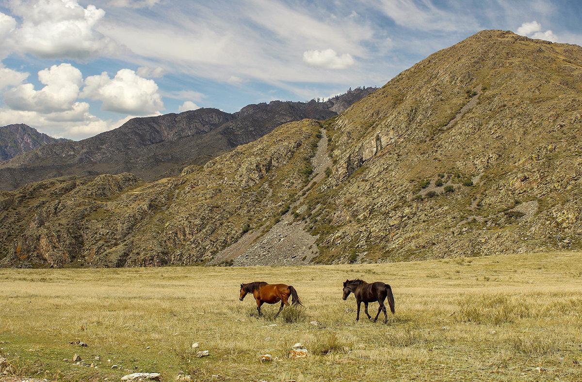 Лошадки в Горах Алтая - И.В.К. ))