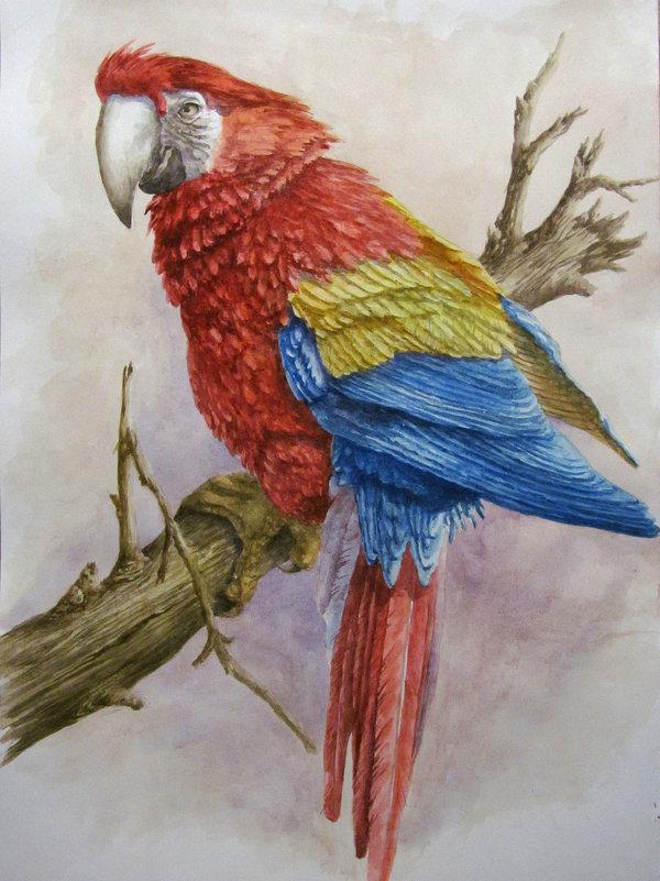 Попугай - rv76