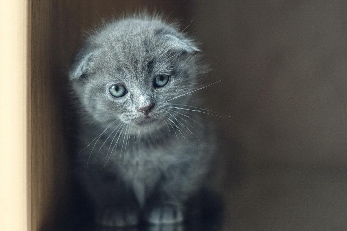 Котёнок - Алина Репко