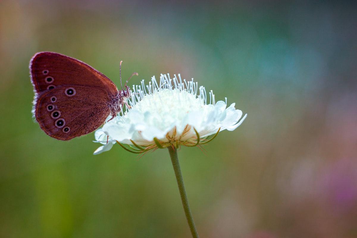 butterfly - Антон Лихач