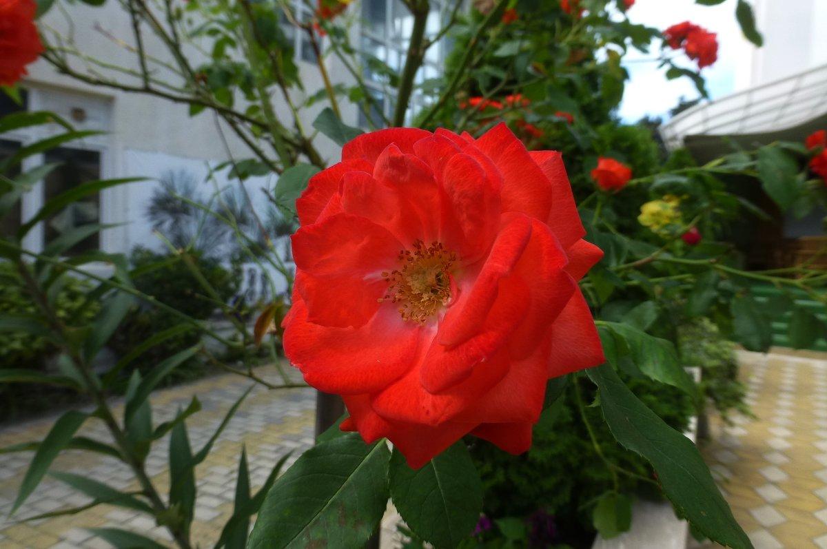Цветы Сочи - Наиля