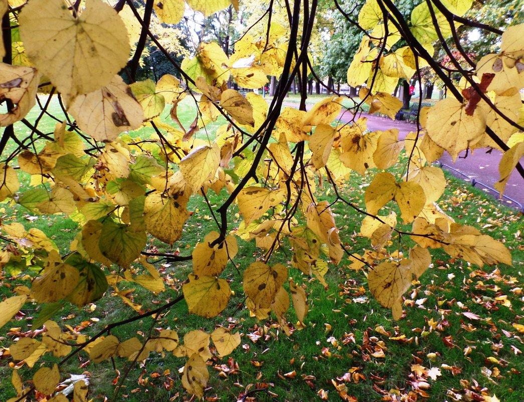 Шатер из осенних листьев... - Марина Харченкова