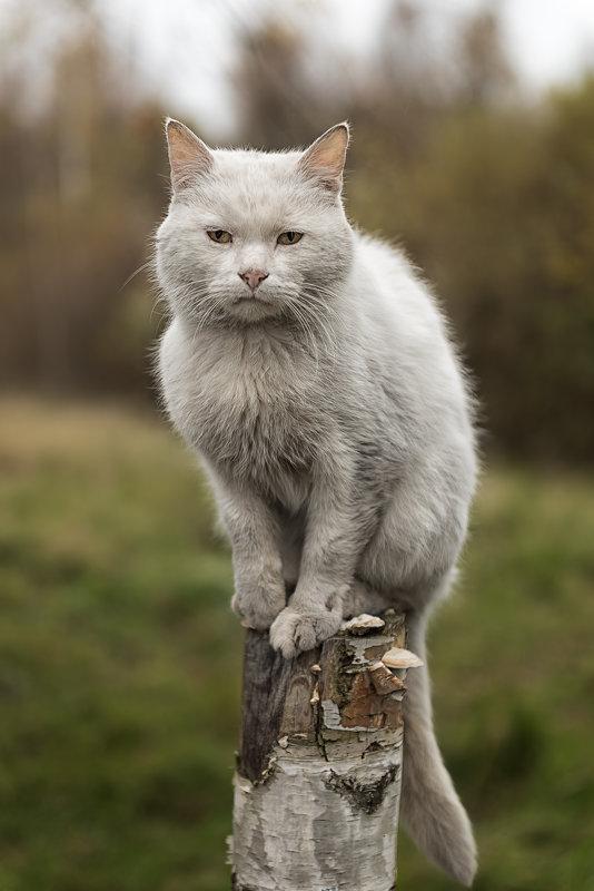 Кот осенний - Владимир Горубин