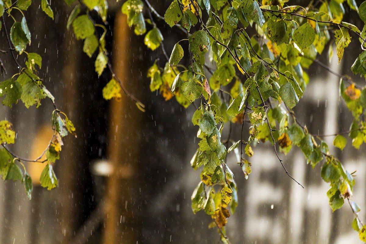 Дождь - Александр