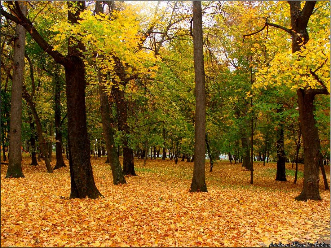 Золотая осень - °•●Елена●•° Аникина♀