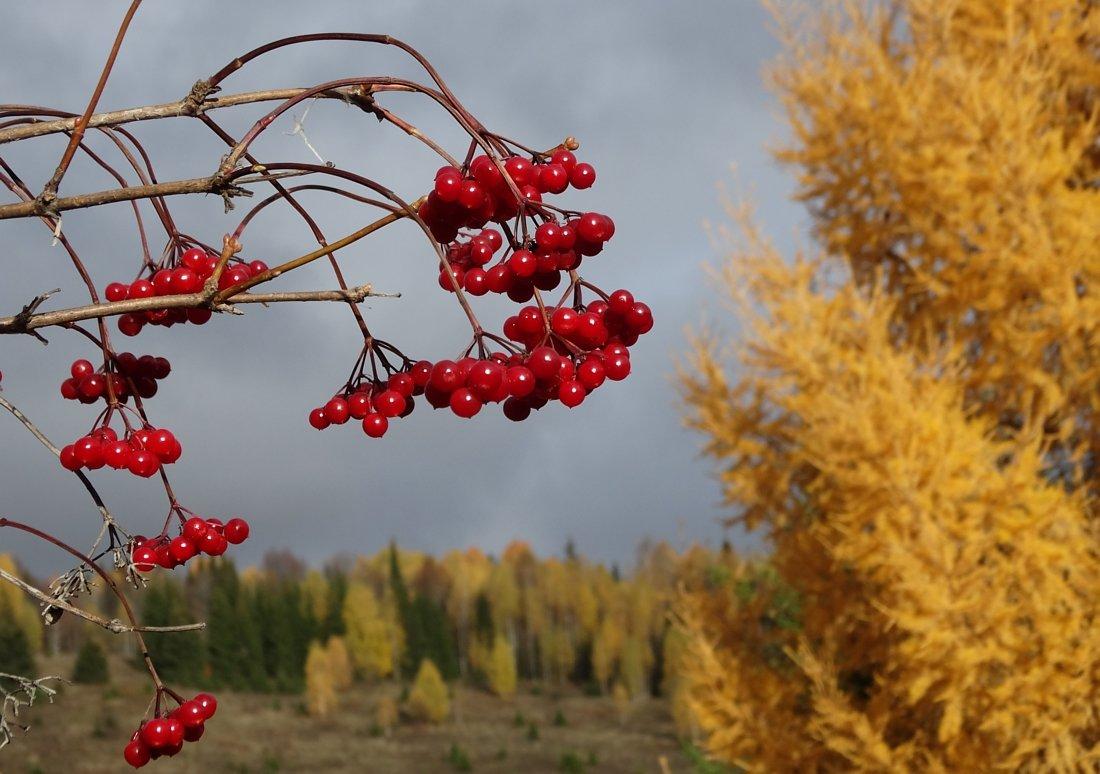 Жёлто-калиновая осень - Валерий Чепкасов