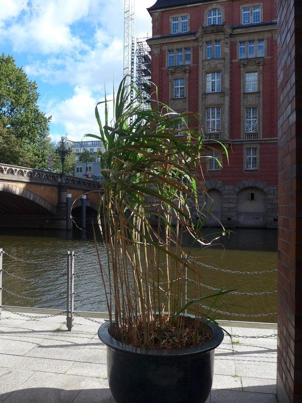 Бамбук на ветру - Nina Yudicheva