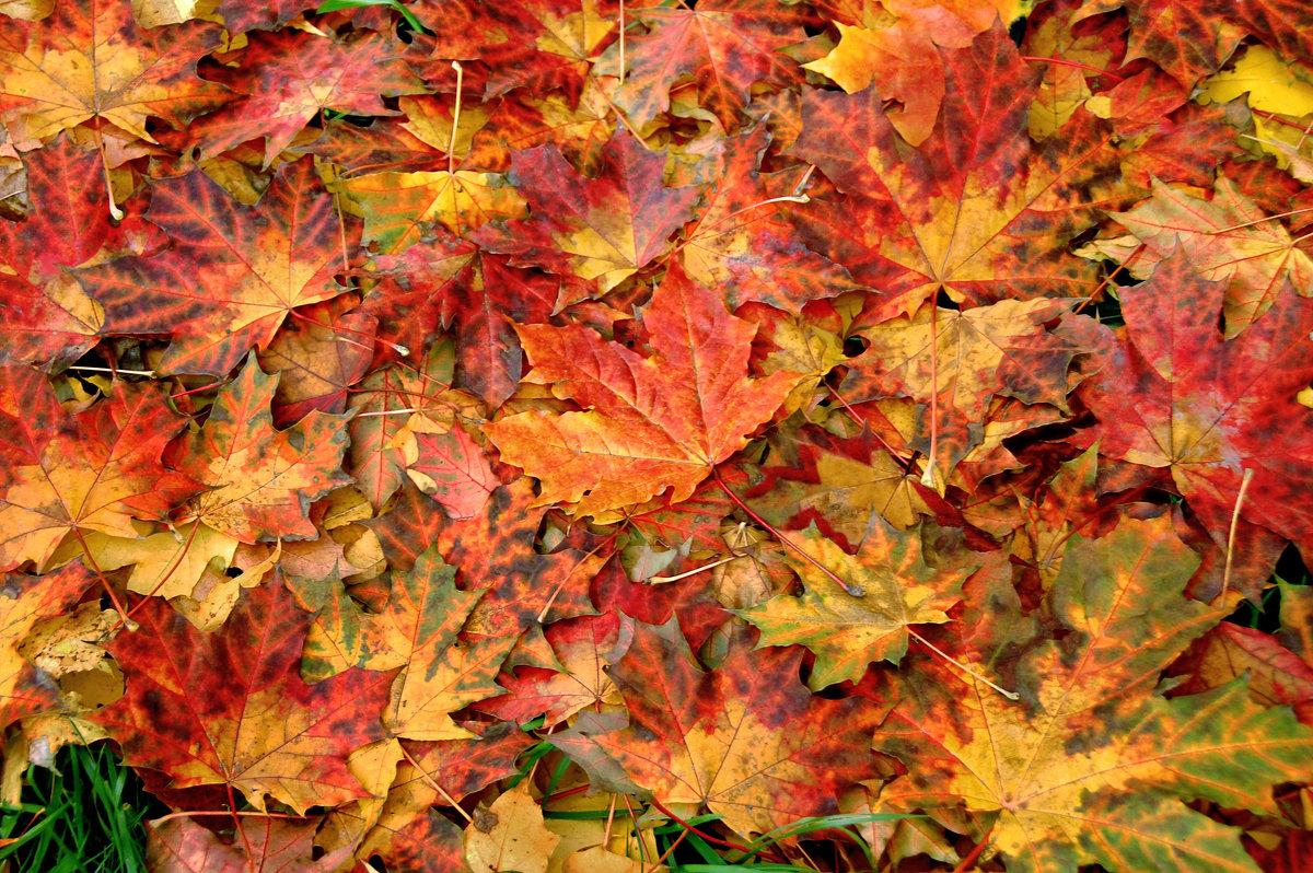 Ковер из осенних листьев - НАТАЛИ natali-t8