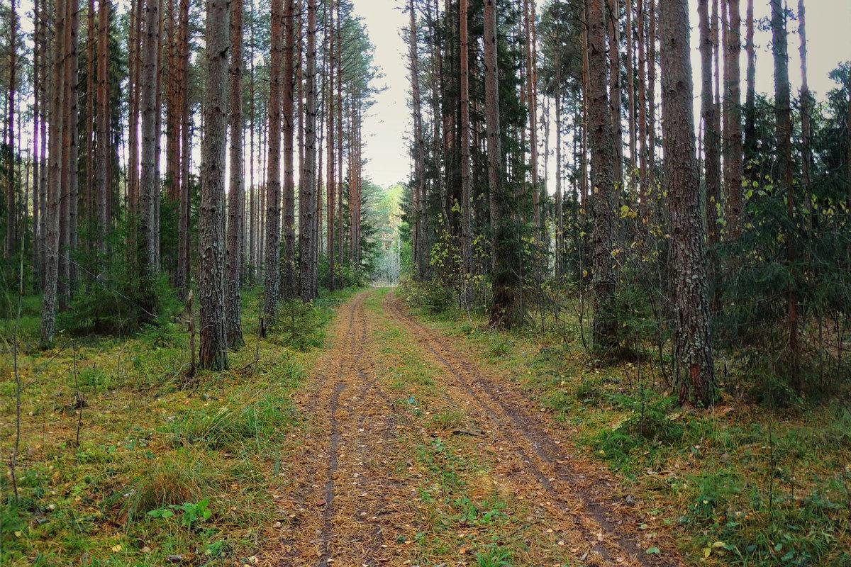 В осеннем лесу - Павлова Татьяна Павлова