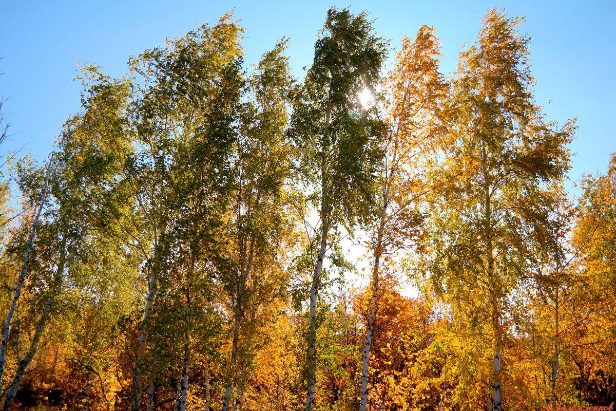 Солнышко октябрьское - Андрей Заломленков
