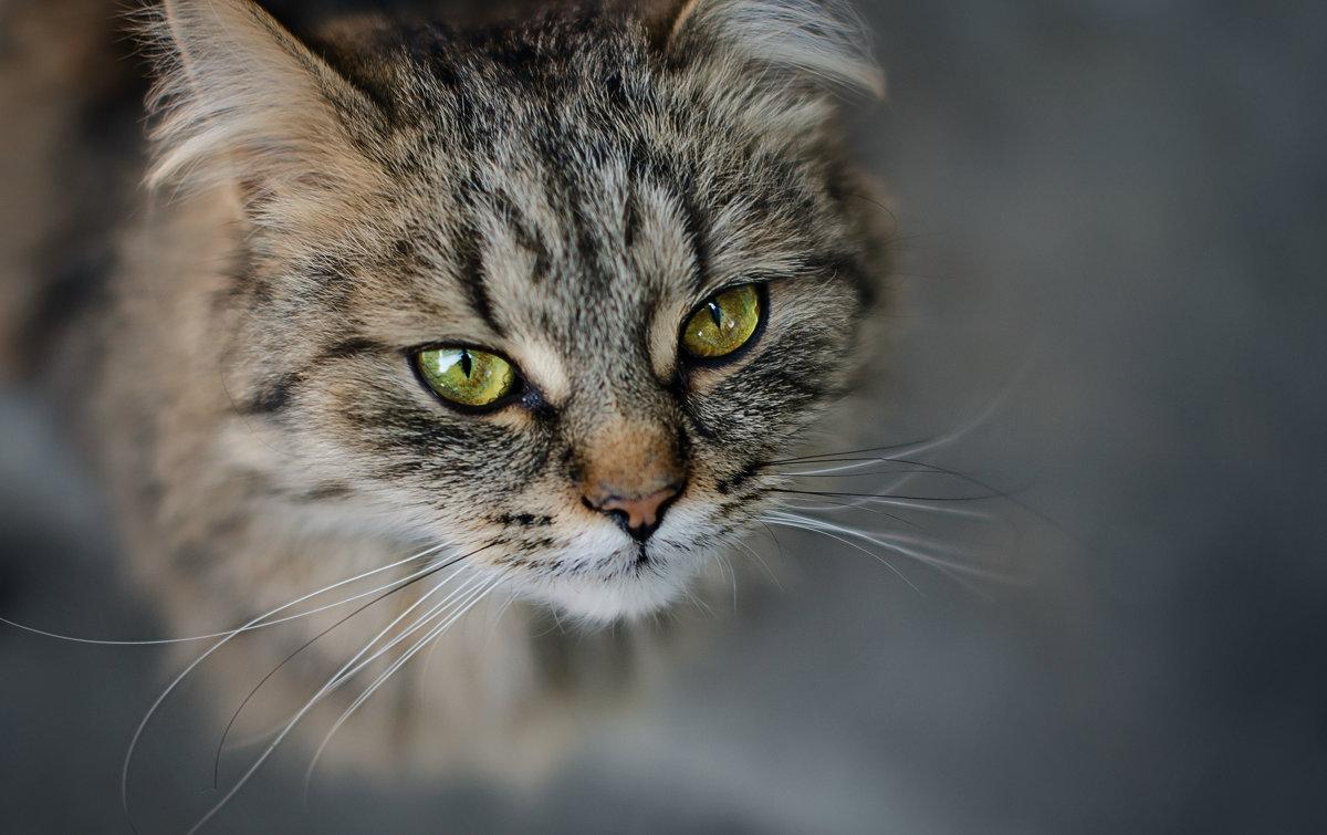О чём думают коты? - Лилия .