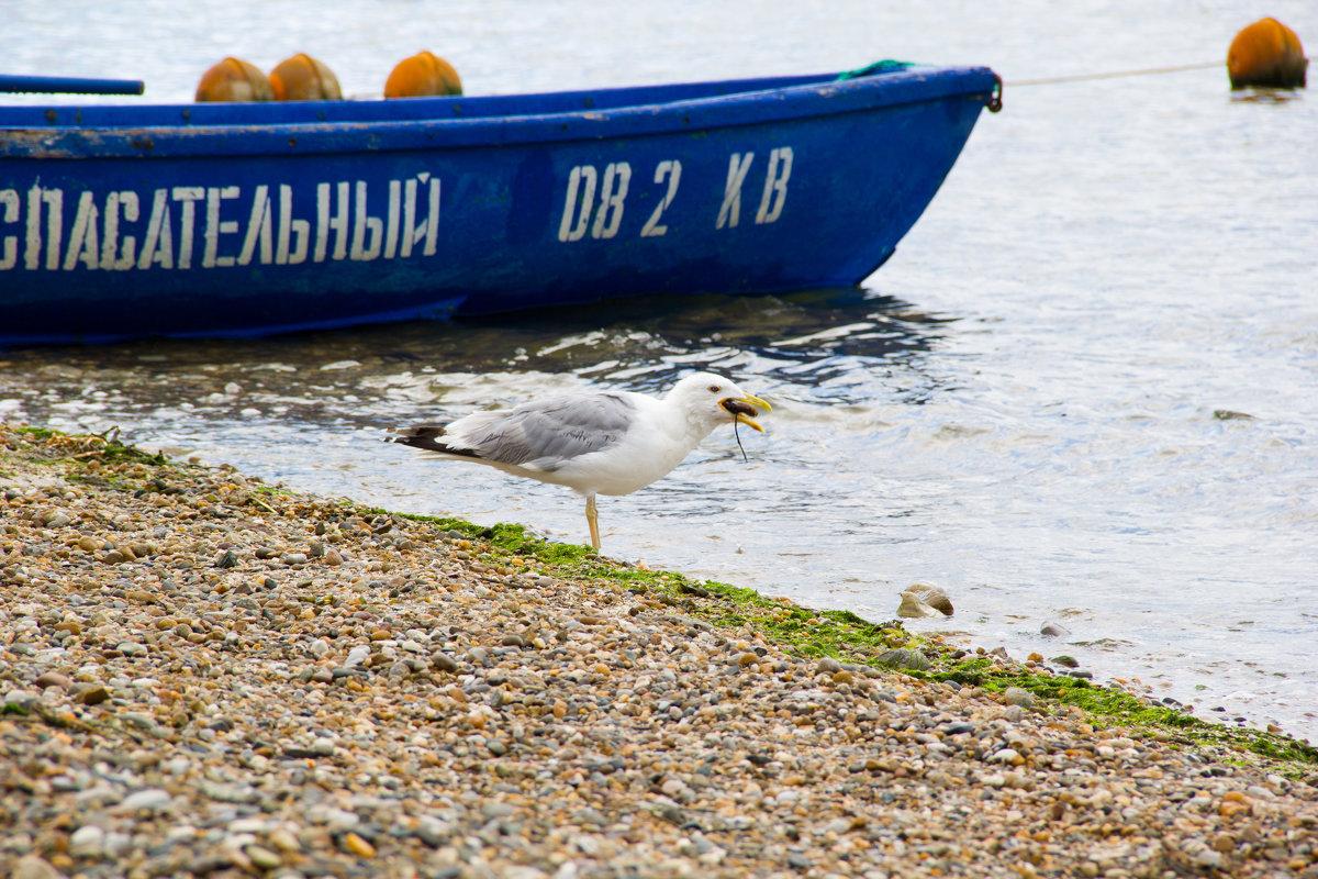 обед чайки - Oksana Verkhoglyad