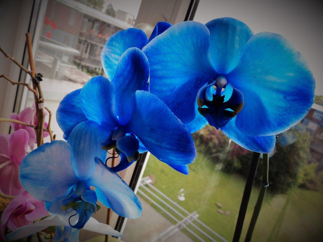 орхидея - kuta75 оля оля