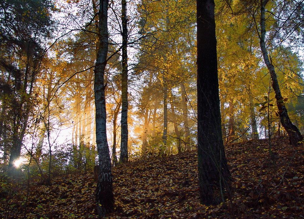 Ещё одна из жизни осень... - Лесо-Вед (Баранов)