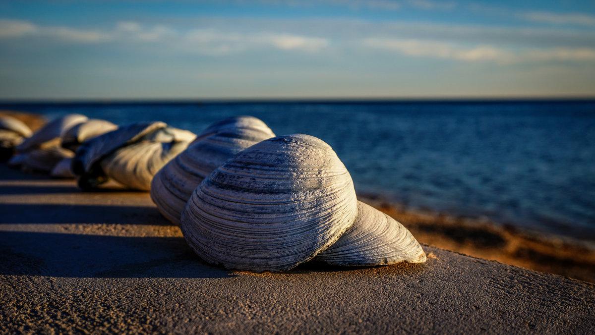 Морской натюрморт... - Арина