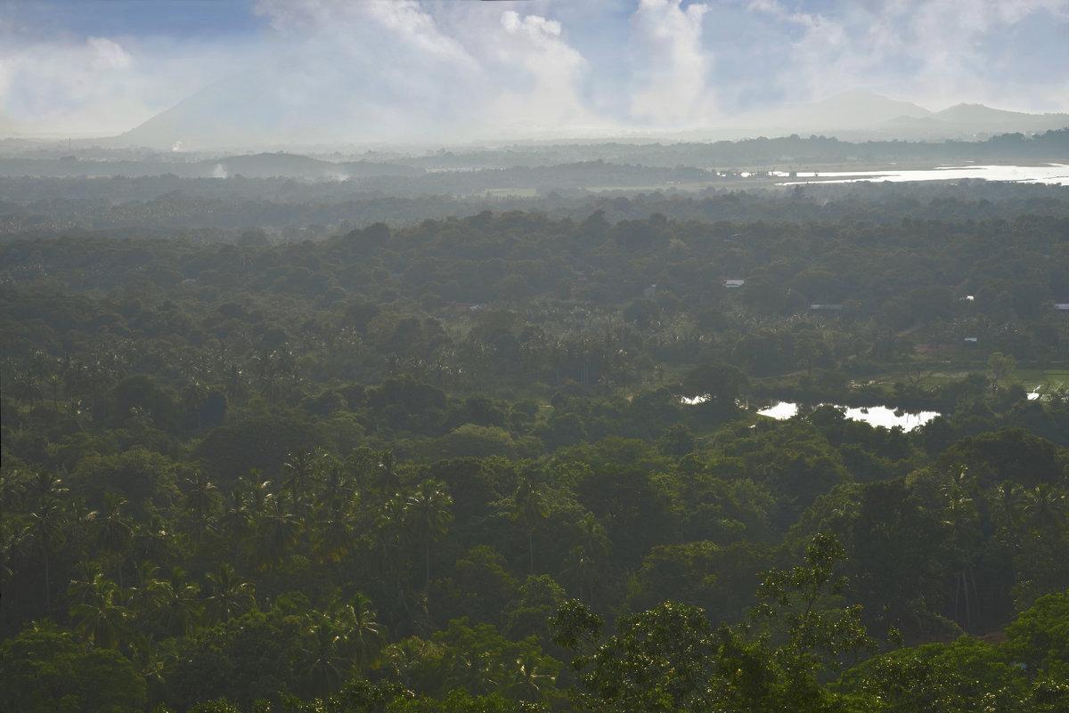 Леса в окрестностях Золотого храма в Дамбулле. Шри Ланка. - Юрий Воронов