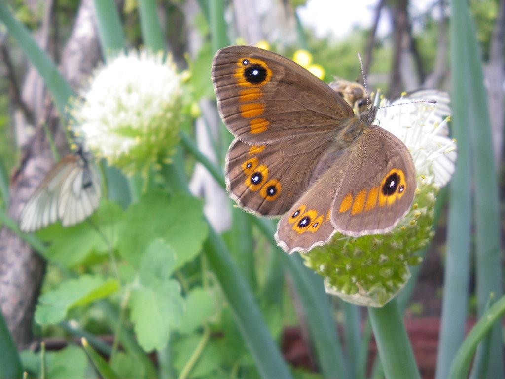 бабочка - Татьяна