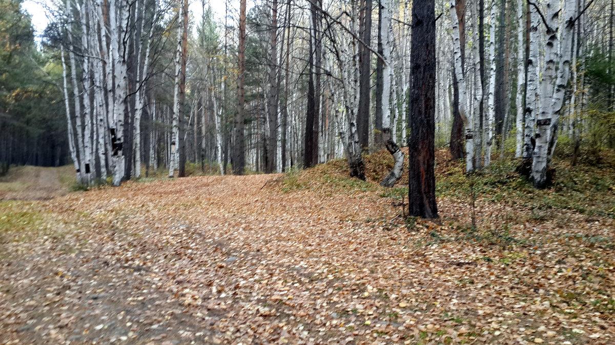 Осенний лес - Наталья Тимофеева
