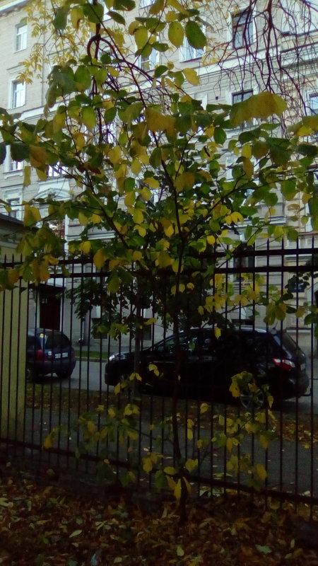 Осень в Монастырском саду. (Санкт-Петербург). - Светлана Калмыкова