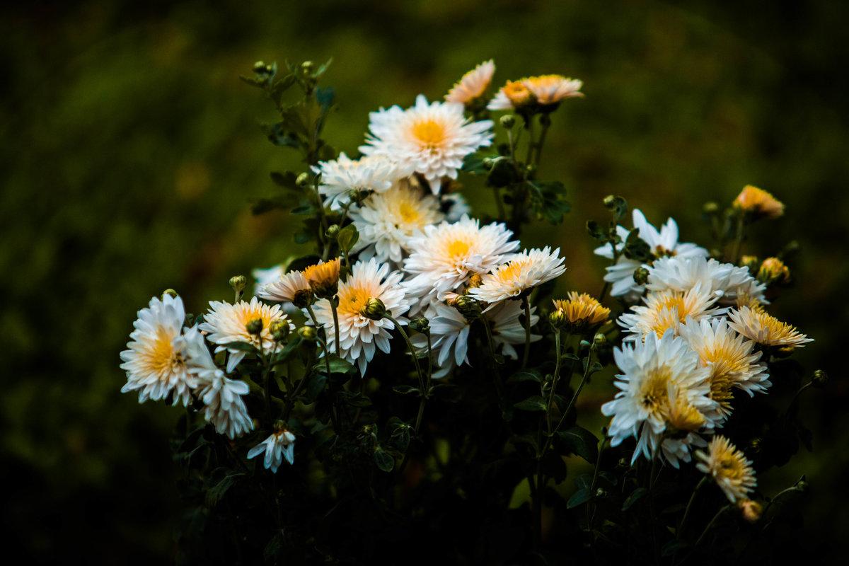 осень в мое саду. - Валерий Гудков