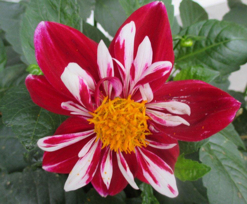 Осенние цветы... - Valentina