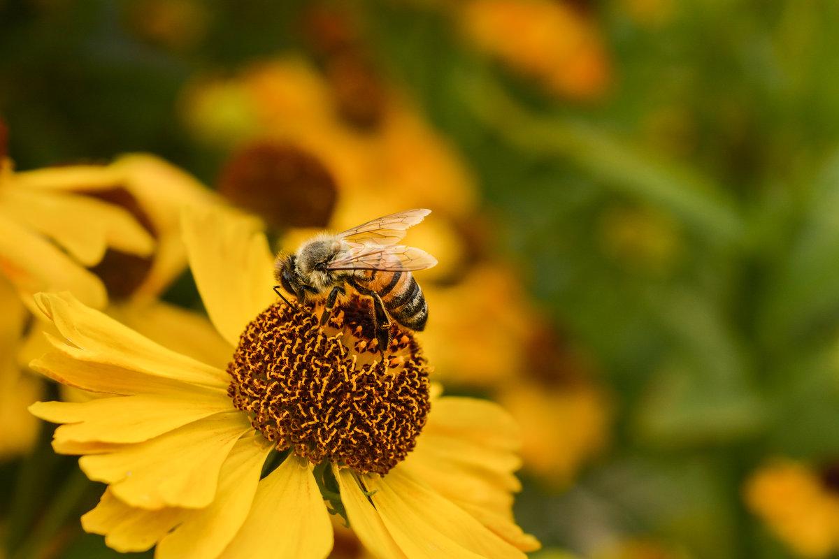 Пчела - Ирина Иванова