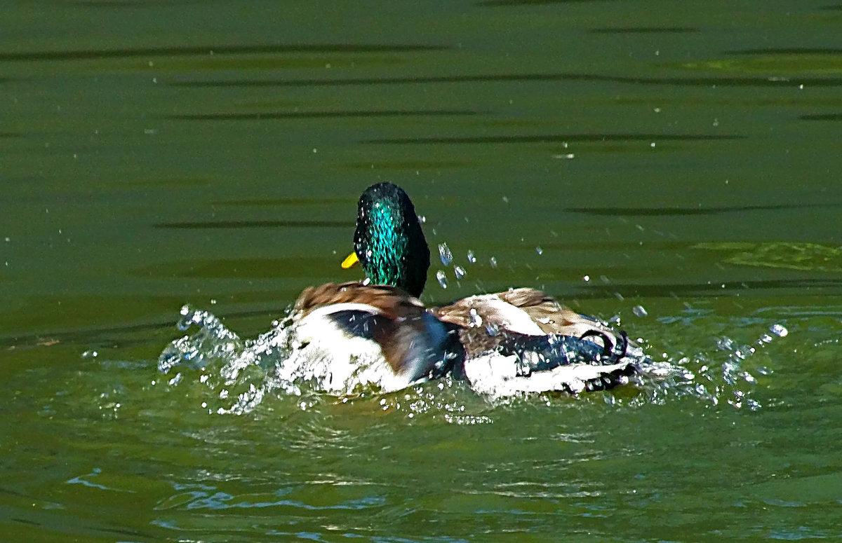 Попотеть, конечно, нужно, чтобы плавать стилем брасс! - Наталья