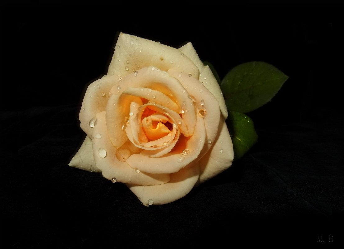 Роза сладкая, роза нежная, как знамение неизбежного... - Людмила Богданова (Скачко)