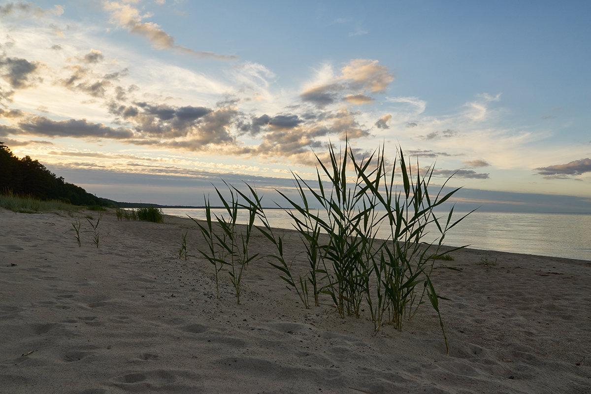 Море - Genych