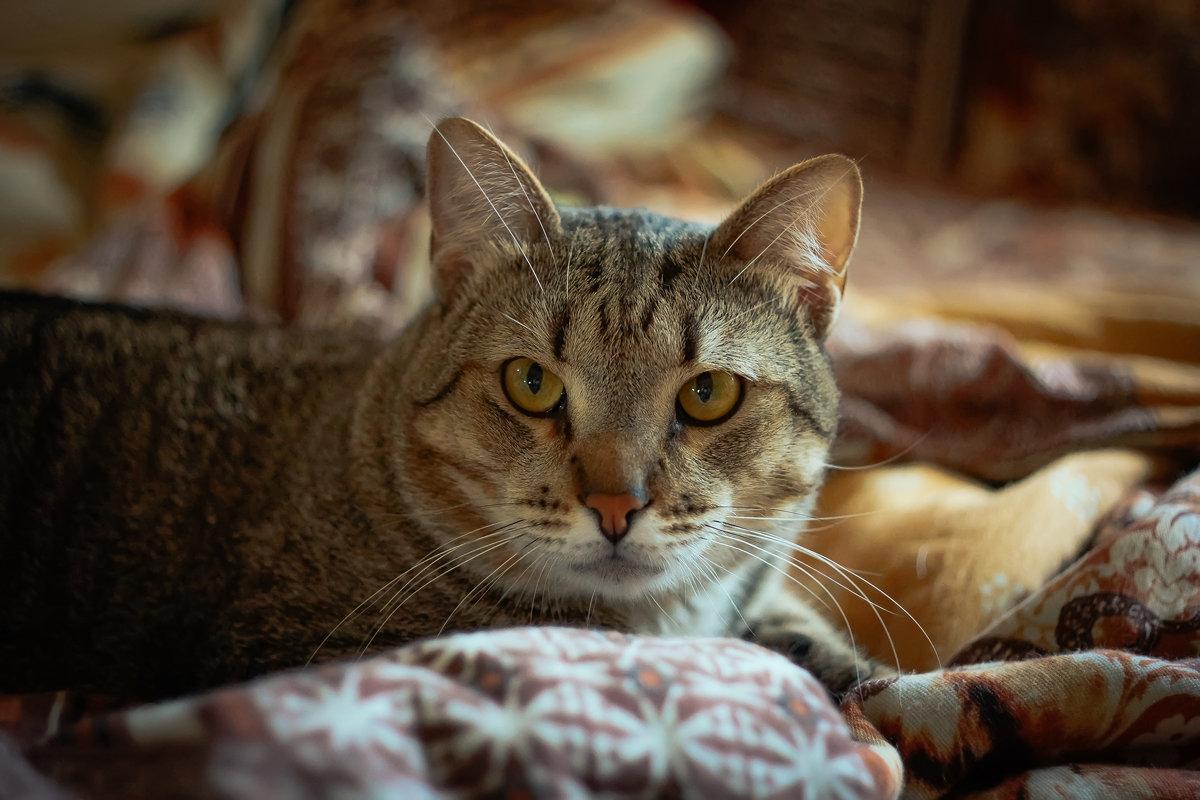Портрет котика Сони) - Дмитрий