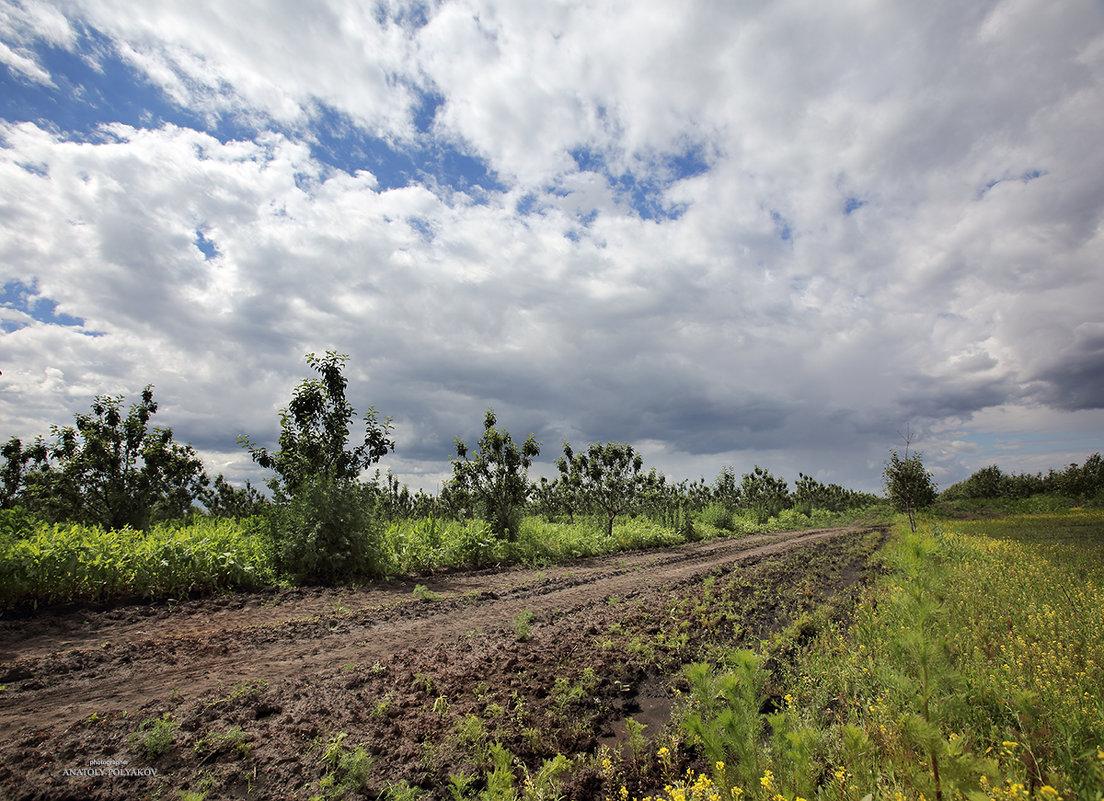 Дорога вдоль фруктового сада. - Аnatoly Polyakov
