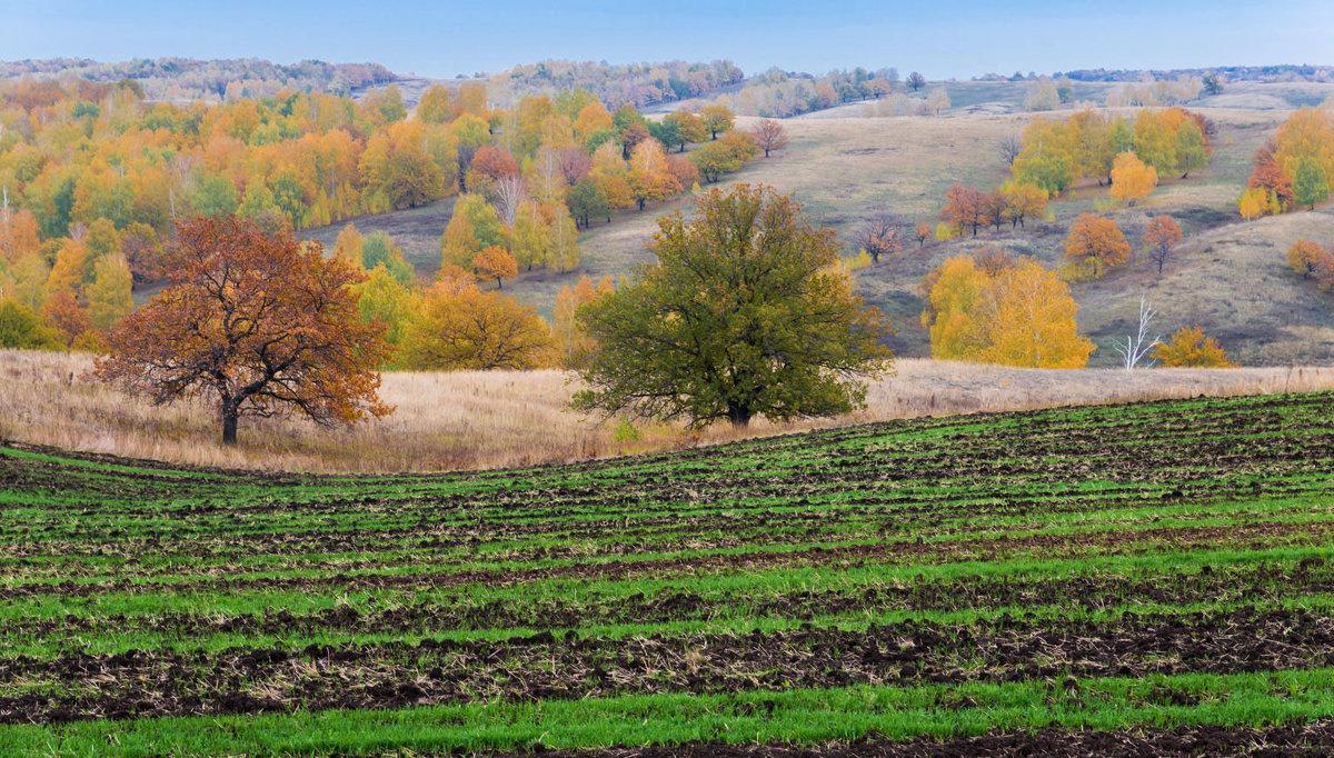 Гуляла осень по холмам - Любовь Потеряхина