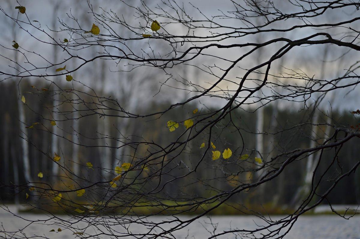 Осенний остров.... - Юрий Цыплятников