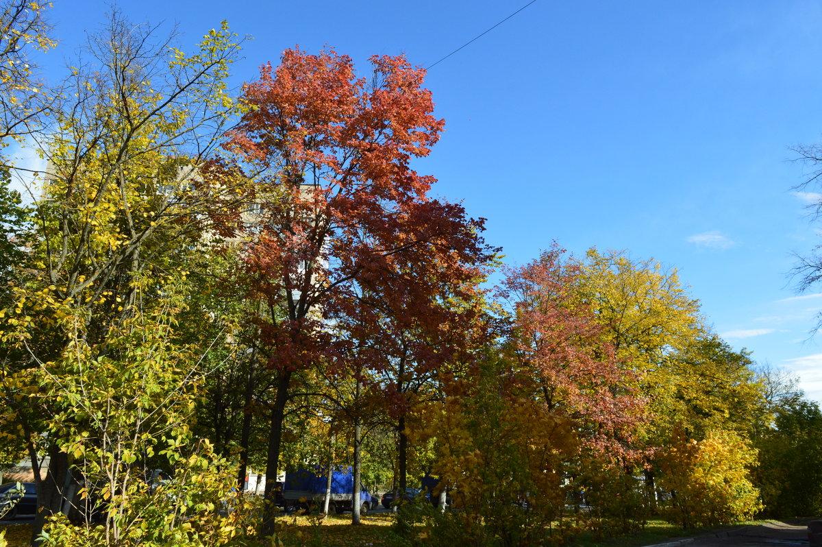 Осень в городе - надежда