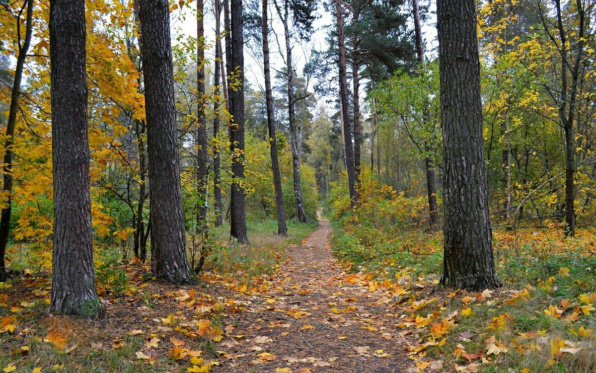В осеннем лесу - Милешкин Владимир Алексеевич