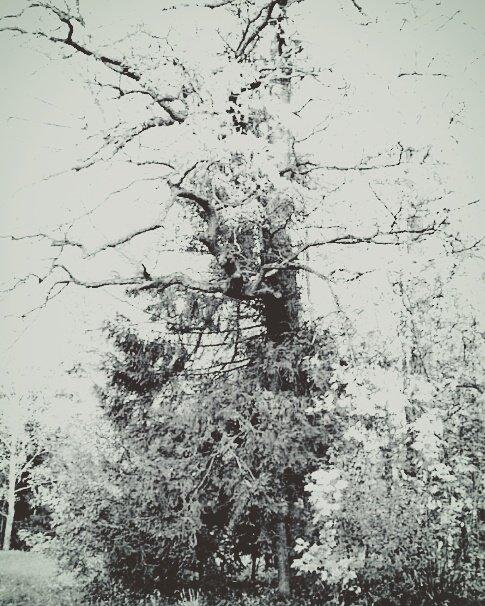 Дерево - Taisia_ZX