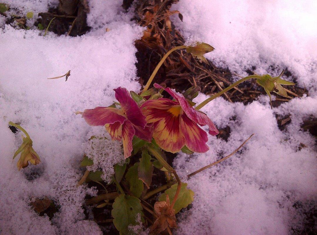цветы - Елена *