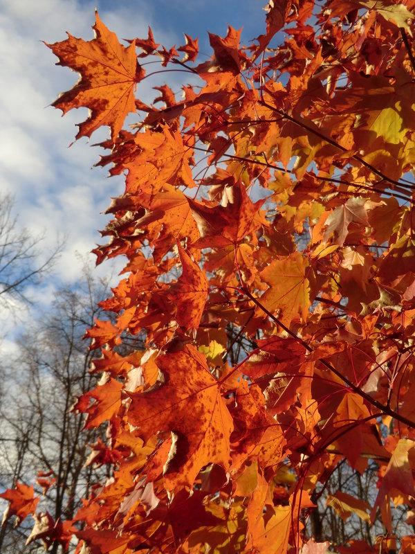 Листья в октябре... - Владимир Павлов
