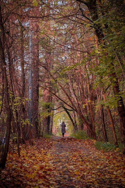 Осень в Сокольниках - Ирина