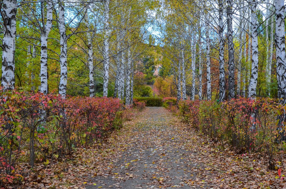 Дорога в осень - Олег