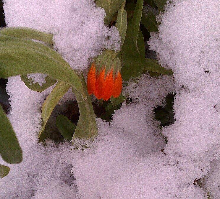 Пришла зима - Елена *