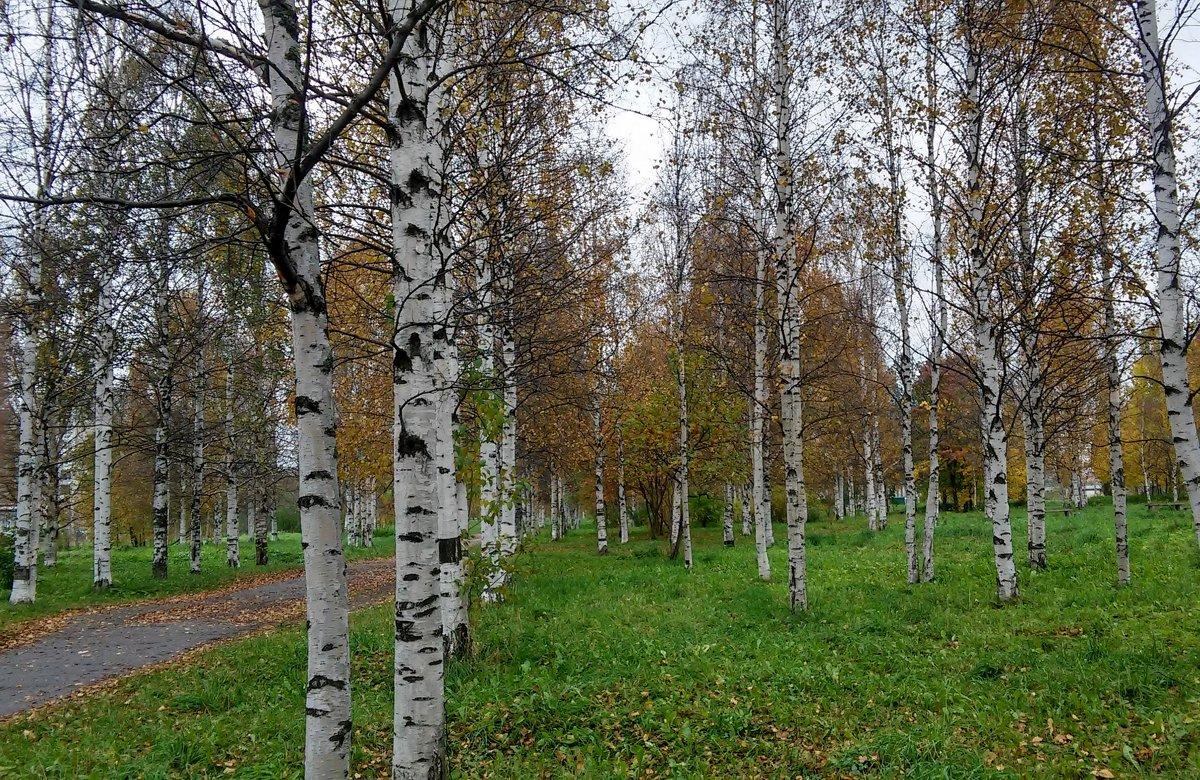 Ранняя осень... - Елена Байдакова
