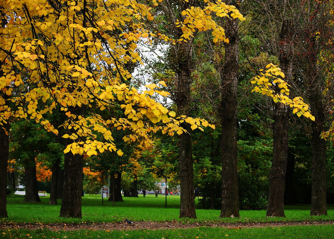 Осенний променад - Виктор Никитенко