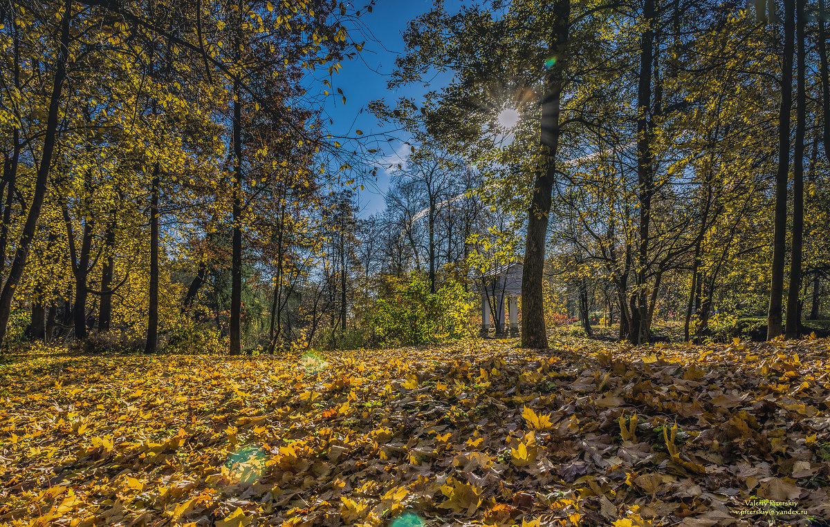 Осеннее яркое солнце золото листьев зажгло - Valeriy Piterskiy