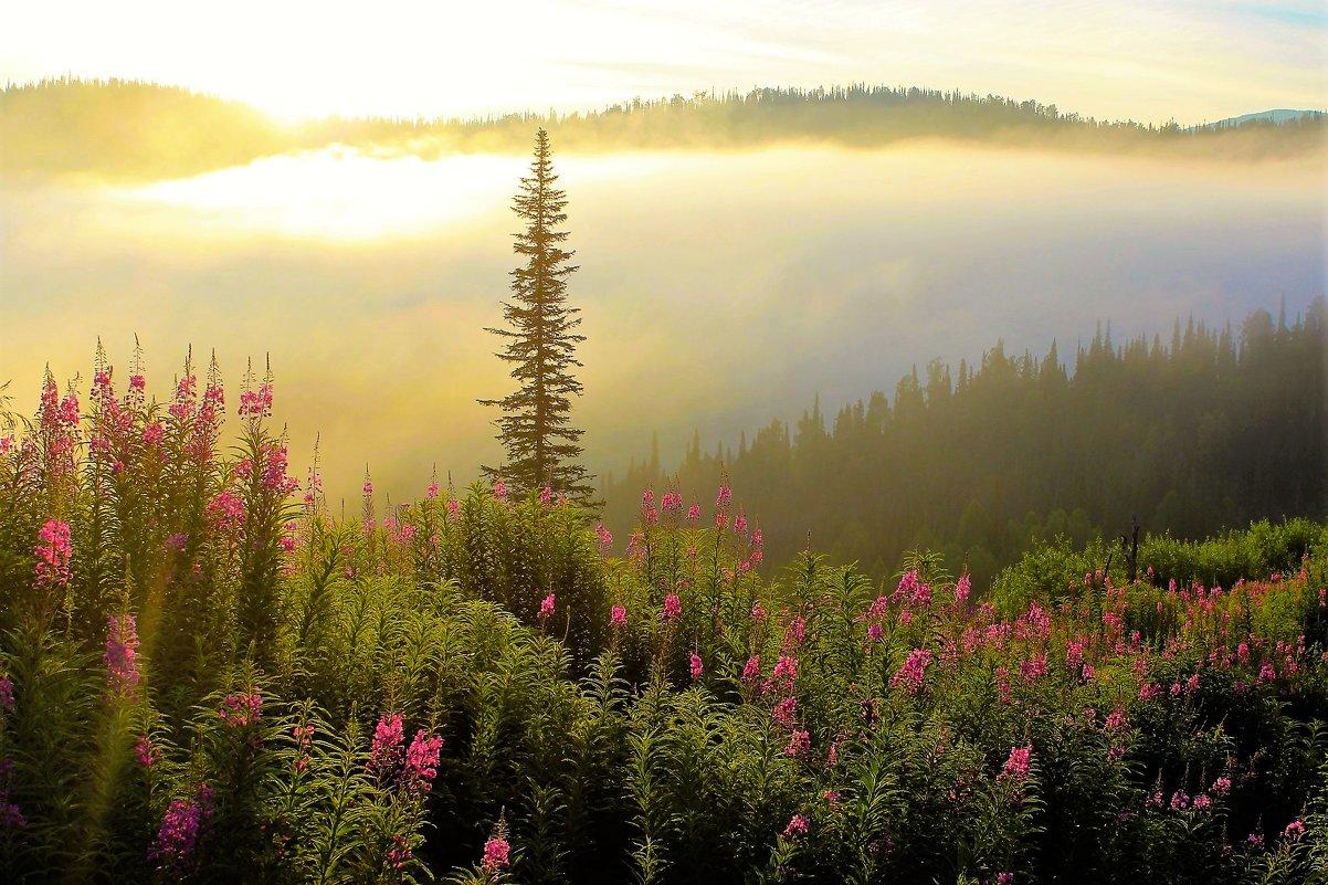 В солнечном тумане - Сергей Чиняев