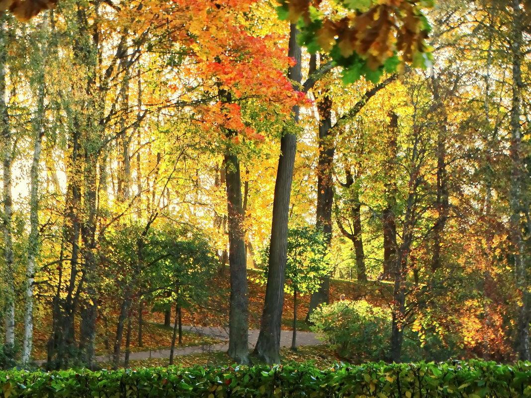 Осень в парке. - Владимир Гилясев