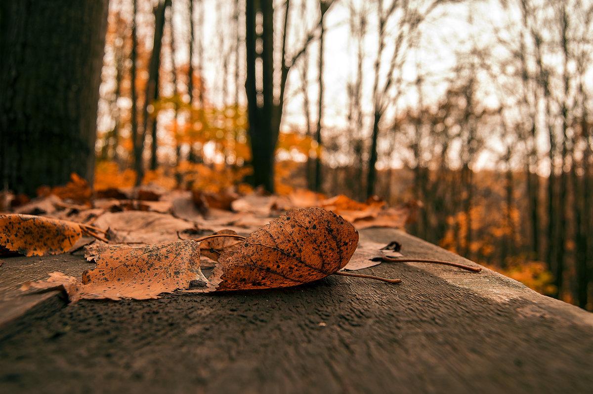 Осеннее настроение - Сергей